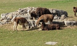 Chapias - Ferme des lamas 2km
