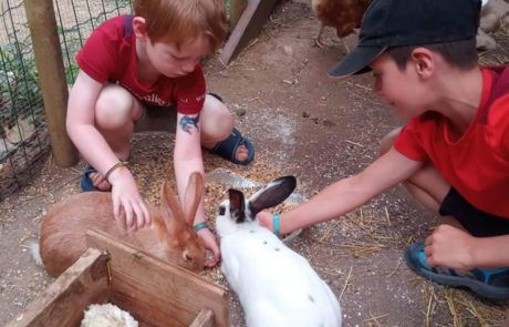 De mini-boerderij
